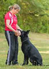 2016-05-22, IPO Training-11 (Falon167) Tags: dog shepherd rhonda german miles gsd germanshepherddog
