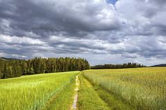 Der Weg... (Mariandl48) Tags: austria wolken ziel wald steiermark weg getreide gerste roggen getreidefelder wenigzell sommersgut