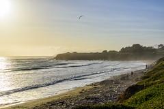 Along Highway 1 -  The coastline (lasse christensen) Tags: dsc5696 usa california highway1 highwayone