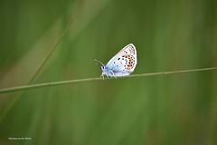In balance (Mariannevanderwesten) Tags: nature butterfly nikon natuur vlinder