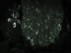190616-10-1 (chrisfriel) Tags: flower grave memorial friel