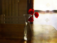 Three Poppies ... (MargoLuc) Tags: lighting flowers red stilllife reflection texture window kitchen glass backlight table spring soft poppies vase wildflowers charming skeletalmess