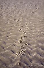 Contact-img753 (hervv30140) Tags: france mediterranee mer plage trace empreinte sable trail mark streak spoor track footprint imprint paysage landscape nature art connection connexion