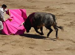 capeando (aficion2012) Tags: ceret 2016 novillada corrida toros bulls bull fight novillos france francia d mario y hros de manuel vinhas torero matador novillero peon capear capeando capa capote
