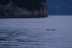 20160724-DS7_1022.jpg (d3_plus) Tags:  d700 drive fish marinesports 70210mmf4 dolphin skindiving izu sea apnea    aiafnikkor70210mmf4s   port watersports hokurikuregion telephoto   japan  fishingport zoomlense  nikon   underwater 70210mmf4af nikkor sky    70210mm  snorkeling notojimaisland nikond700 702104 scenery 70210mmf4s  dolphinswim 70210  ishikawapref  tele   diving