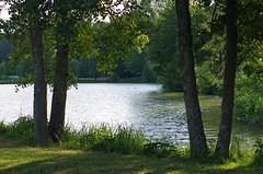 Monthou-sur-Cher (Loir-et-Cher) (sybarite48) Tags: monthousurcher loiretcher france tang pond teich   estanque  stagno  vijver staw lagoa  glet