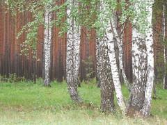 Okunevo, Omsk Region, Siberia (103) (Sasha India) Tags: siberia okunevo omsk omskoblast omskregion travel journey