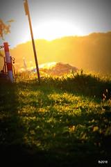 IMG_4678 (fejesb) Tags: summer