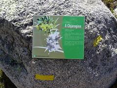 Corse16082590002 (Corse sauvage) Tags: cuscionu coscione vinaghjolu vinajolo menta bucchinera chiralbella chiralbedda pianu pinau durnucciu dornucciu castellu quenza