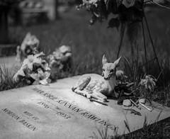 Fan Ephemera (macromary) Tags: pentax67 analog 120 120film mediumformat florida 105mm f24 alachuacounty grave cemetery ephemera graveephemera marjoriekinnanrawlings famousinterment novelist memorial adox adox120 adox20 theyearling crosscreek