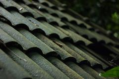 IMG_1920_1 (pavel.milkin) Tags: thailand phuket kathu travel nature kathuwaterfall roof canon canon550d 550d helios helioslens helios442 442 green stair tree colour bokeh bokehlicious