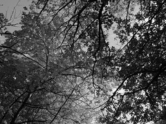 The Tenth of October (mohawk) Tags: bw black white lowkey gray tree trees berries blackberries cloud october tenth wirral way west kirby reaching over overgrown growing autumn seeds dying decay fruit sky landscape tone mono print monotone monochrome monochromatic winter season seasons change changing leaves vines thorns nature wild chaotic uncontrolled overrun deep sleep sleeping dream