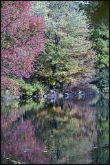 _DSC3913 (startowa13) Tags: nyc fall nature zeiss centralpark sony 13518 zeiss135mmf18 a7s