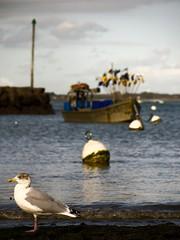 Mouillage de Lanséria (olyv70) Tags: france bretagne bateau oiseau pêche atlantique océan goéland bouée loireatlantique quimiac mesquer bateaudepêche plagedelanséria