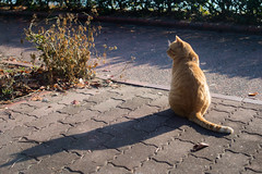 PhoTones Works #6156 (PhoTones_TAKUMA) Tags: cat landscape nikon df scenery natural     kimura   takuma   photones