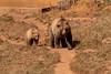 IMG_2891 Osos (Juancarlosxl) Tags: bear parque cantabria osos cabárceno parquedecabárceno