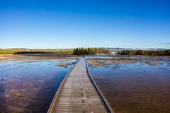(Rotifer) Tags: yellowstonenationalpark yellowstone geothermal yellowstonepark geothermalarea yellowstonegeothermal yellowstonegeothermalarea