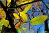 PALETTE DE COULEURS D'AUTOMNE (Gilles Poyet photographies) Tags: automne couleurs arbre soe auvergne feuilles beaumont puydedôme autofocus lachâtaigneraie aplusphoto artofimages rememberthatmomentlevel1
