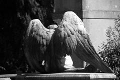 Campo Verano (michael_hamburg69) Tags: italien italy sculpture friedhof rome roma cemetery grave angel wings italia ange tomb skulptur engel grab rom tomba figur scultura graeber flügel gottesacker cimiterodelverano campoverano grabstelle cimiteromonumentalealverano