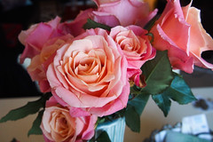 roses (AS500) Tags: pink roses flower rose