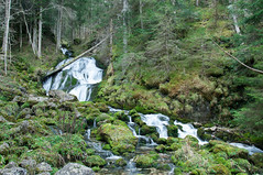 Fall of the Gorges du Bruyant (Hug0R) Tags: autumn france alps green fall nature water rock forest alpes river landscape moss eau hiking pierre vert hike rivire gorges vercors cascade humidity mousse