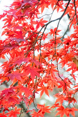 DSC_7756.jpg (d3_plus) Tags: park street autumnfoliage sky nature japan garden scenery outdoor fine sunny  streetphoto yokohama      j4   sankeien  sankeiengarden    nikon1   1nikkorvr10100mmf456 1 nikon1j4