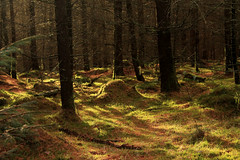 woodland (Jacob Kazara) Tags: uk trees tree nature beautiful forest woodland landscape moss woods quiet peaceful naturallight mysterious colourful endless