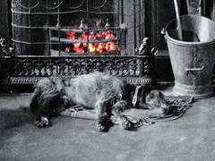 Let Sleeping Dogs Lie (kathleenh23) Tags: dog beer fire pub warm sleepy doggy