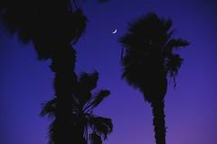(ShutterCrux) Tags: california blue trees sunset sky moon silhouette night palm socal