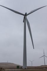 Wind turbine with Rottie (RCB4J) Tags: art photography scotland electricity greyday drizzle windturbines scotchmist whiteleewindfarm sonydt18250mmf3563 sonyslta77v ronniebarron rcb4j 539megawatts windturbine40