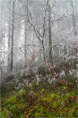 Am Nerother Kopf... (bugramm) Tags: nebel pentax eifel kopf vulkaneifel neroth pentaxda1224 nerother raufeif pentaxk5ii