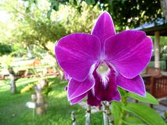 Flower (3) (msvetec) Tags: ocean flowers orchid flower macro lumix indian panasonic maldives ft2 sunisland sunislandresortspa flickrandroidapp:filter=none