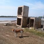 Dog-Henge thumbnail