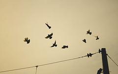 B I R D F L I G H T (Jonhatan Photography) Tags: chile canon follow ave vuelo tiltil