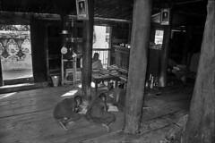 Myanmar (luca marella) Tags: travel school people bw film analog children blackwhite asia burma religion documentary monk social pb bn monastery biancoenero reportage lucamarella