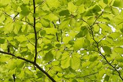 Lvverk (hkkbs) Tags: green gteborg sweden gothenburg foliage sverige leafs westcoast grn lv vstkusten slttadamm lvverk nikond800 bjursltt tamronsp2470mmf28divcusd