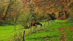 (MATIGRA) Tags: autumn trees horse canon landscape cheval brittany champs bretagne arbres fields prairie 29 paysages bzh finistere 700d henvic