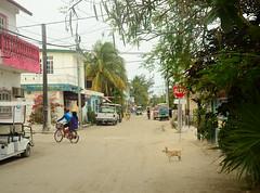 Holbox (moke076) Tags: road street travel vacation people dog chihuahua sign golf mexico island fishing sand nikon village small scene dirt stop cart roo quintana holbox islaholbox d7000