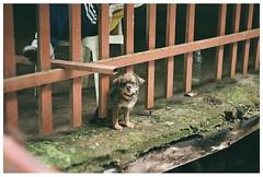 Woof (Patrick J. Negwer) Tags: dog naturaleza verde green dogs nature water rio river waterfall ecuador agua perro perros cascadas mindo nambillo