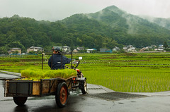 farmer delivers rice plants in Ashikaga (Balancingtouch-Adam) Tags: morning mist mountains japan farmer ricefields 足利市
