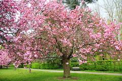 IMG_4558 (Irina Souiki) Tags: parcdesceaux france paris sceaux flowers nature parc park