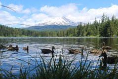 Duck eye view of Mount Hood (Gunn Shots (Mark Gunn)) Tags: mountain mounthood trilliumlake