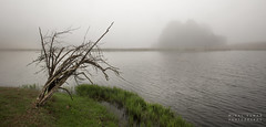 Mists of Dullstroom (migalvanas) Tags: africa winter mist lake cold tree water fog outdoor south stump dullstroom