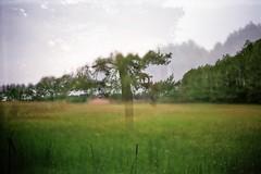 """But I'm sleeping...."" (AirSonka) Tags: tree green film nature analog 35mm outside spring lomo doubleexposure meadow multipleexposure analogue smena smena8m doubleexposed pelcula filmphotography pellicule agfavista200 airsonka doppelbelichtung soniakaniss"