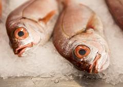 Seabream (Hans van der Boom) Tags: europe portugal algarve vacation holiday albufeira animal food dead fish market closeup pt