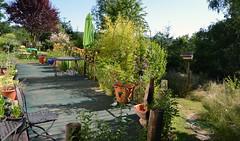 DSC_0967-1 (Chaumurky) Tags: h garden
