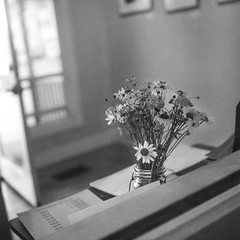 floral bouquet, interior, 25 Oak Gallery, Rockland, Maine, Rolliecord TLR, Fomapan 200, Ilford Ilfosol 3 Developer, early July 2016 (steve aimone) Tags: floral bouquet flowers interior doorway 25oakgallery rockland maine monochrome monochromatic mediumformat midcoast 120 film rolliecord fomapan200 ilfordilfosol3developer
