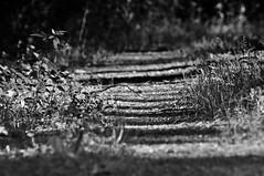 walk (friedrichfrank1966) Tags: wanderung outdoor sun sonne einfarbig monochrome bw focus natur weg nature wald walk shadow schatten