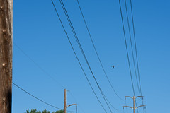 UAV Inspects Transmission Lines in Nashua (eversourcenh) Tags: uav nashua drones transmission