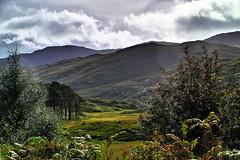 Road to Mallaig (Fr Paul Hackett) Tags: mountain glen tree sky